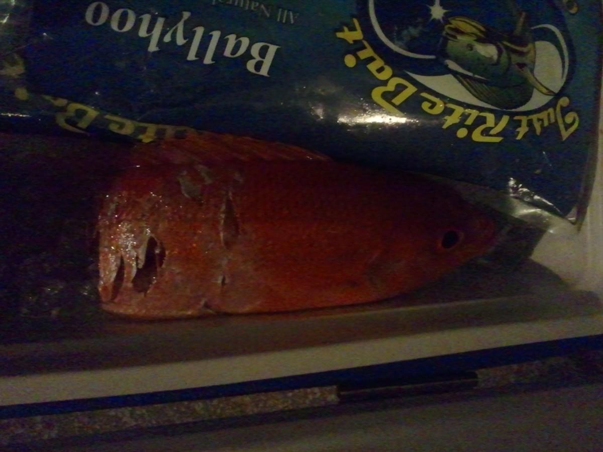 Half of a Fish